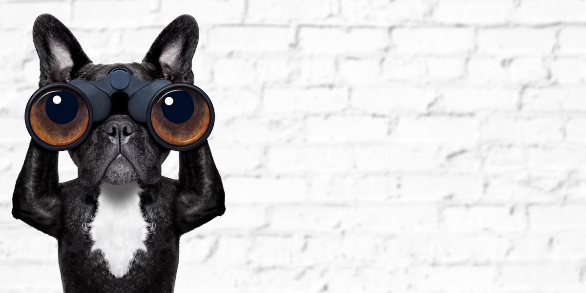 Atlanta Excel Training Dog